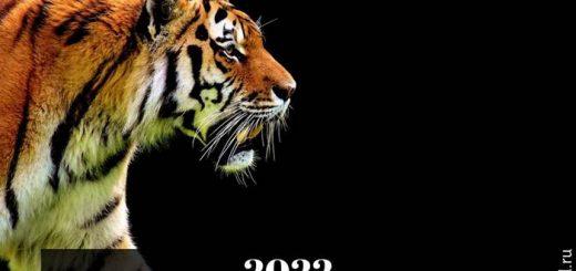 2022 год Чёрного Водяного Тигра