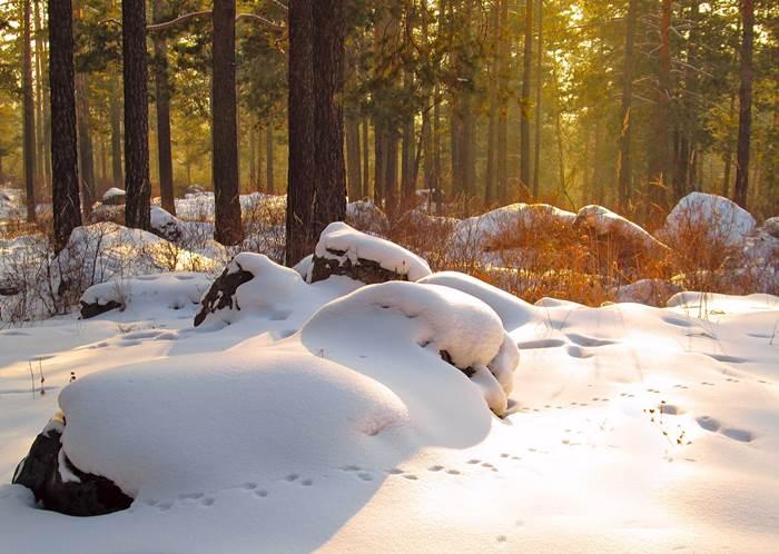 Следы на снегу в лесу зимой