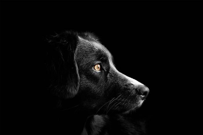 Собака по гороскопу