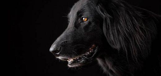 Гороскоп для Собаки на 2021 год