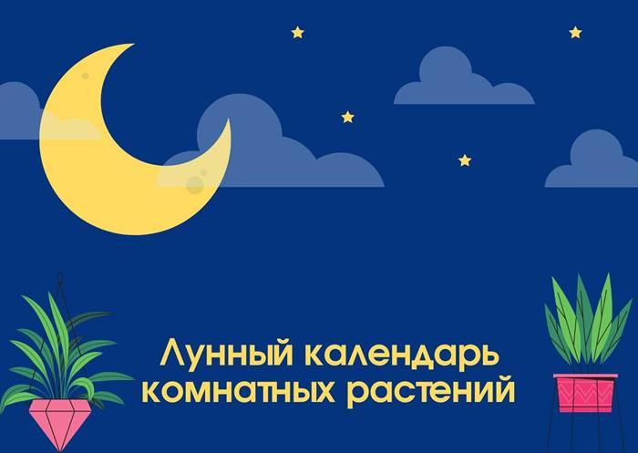 Лунный календарь комнатных растений