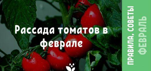 Рассада томатов в феврале
