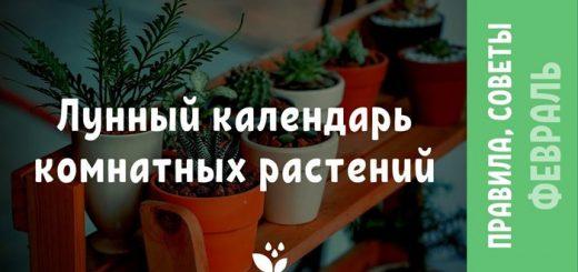 Лунный календарь комнатных растений на февраль