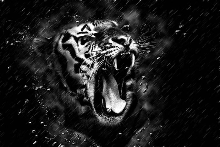 Чёрный Тигр