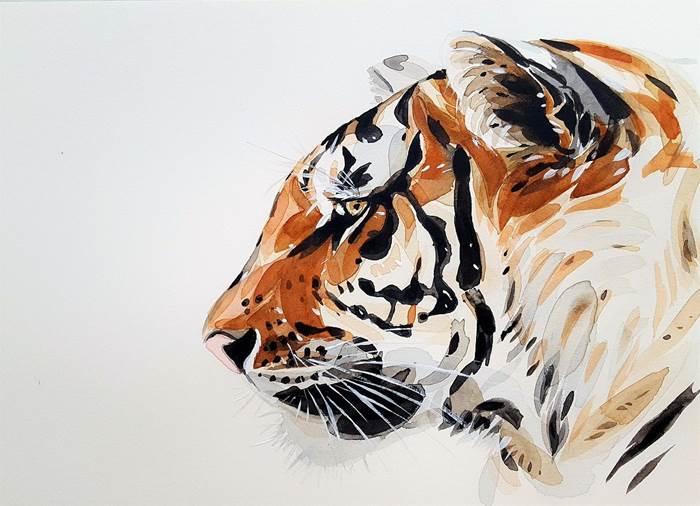 Тигр картинка